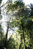 Monteverde rain forest (Costa Rica) Royalty Free Stock Photography