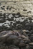 People at Rocky Shore Stock Images
