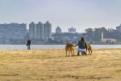 Malvin Beach, Montevideo, Uruguay. MONTEVIDEO, URUGUAY, JULY - 2016 - Woman with 2 dogs at malvin beach in the coast of Montevideo city, Uruguay Royalty Free Stock Images