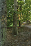 Montevideobotanisk trädgård Arkivbilder