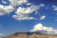 Montez le ler d'arums dans le jour ensoleillé contre le ciel bleu couvert par des nuages Images libres de droits