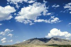 Montez le ler d'arums pendant le jour ensoleillé d'automne contre le ciel bleu couvert par des nuages Photos libres de droits