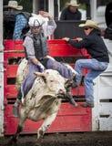 Montez-les cowboy Image libre de droits