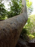 Montezuma Well Obraz Stock