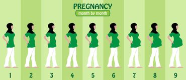 Month by month pregnancy stages of pregnant muslim woman with hi. Jap. All the objects and body stages are in different layers and the text types do not need any Stock Photos
