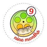 Monthly baby sticker Stock Photos