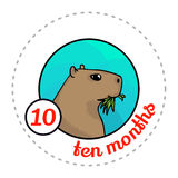 Monthly baby sticker. Cute cartoon animal illustration for little boy or girl. First year, ten months. Capybara chewing grass Stock Image