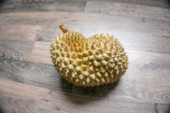 monthong del durian en el piso laminado foto de archivo