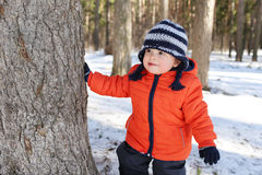 18 months baby hides behind tree in forest Royalty Free Stock Image