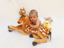 4 months old baby boy playing with soft toy dear and chick Stock Image