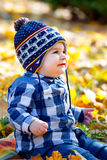 8 months old boy in the fall Stock Image
