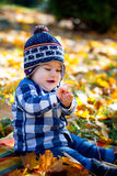 8 months old boy in the fall Stock Images