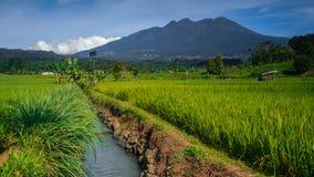 Monti il lawu con l'azienda agricola del tè della priorità alta, i grandi alberi ed il cielo blu Fotografia Stock Libera da Diritti
