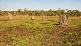 Monticelli della termite Fotografia Stock