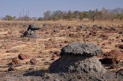 Monticelli della termite nelle Afriche occidentali Fotografia Stock Libera da Diritti