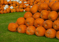 Monticelli delle zucche arancio e bianche Fotografia Stock Libera da Diritti