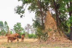 Monticello della termite Immagini Stock