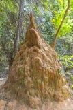 Monticello della termite Fotografie Stock Libere da Diritti