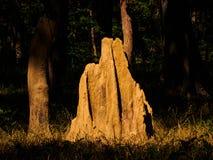 Monticello della termite Fotografia Stock