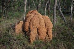 Monticello della termite Fotografie Stock