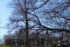 Monticello fasada i drzewo scena obraz royalty free