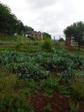 Monticello-Garten Lizenzfreies Stockfoto