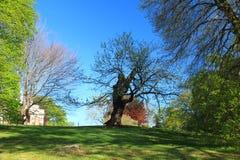 Monticello - la Virginia Immagini Stock Libere da Diritti