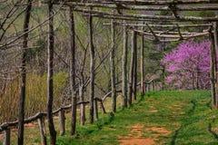 Monticello Log Trellis. Monticello Charlottesville Virginia log trellis Stock Photos