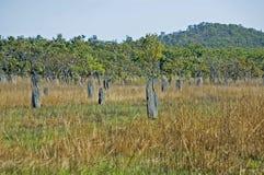 Monticello magnetico della termite, parco nazionale di Litchfield, Australia Fotografia Stock Libera da Diritti