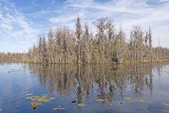 Monticule dans un marais à distance Image stock