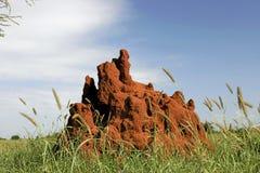 Monticule de 46 termites Photographie stock libre de droits