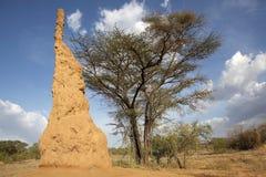 Monticule de termite Images stock