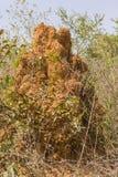 Monticule de termite Images libres de droits