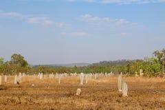 Monticule de termite Photo libre de droits