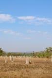 Monticule de termite Photos libres de droits