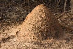 Monticule de termite dans la région sauvage australienne photo stock