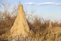 Monticule de termite dans la savane, Afrique du Sud Photographie stock