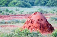 Monticule rouge de termite Photographie stock libre de droits