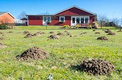 Monticules de taupe sur le champ d'herbe suédois Photo libre de droits