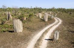 Monticules de termite Images stock