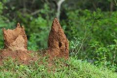 Monticules de termite Photos libres de droits