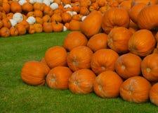 Monticules des potirons oranges et blancs Photographie stock libre de droits