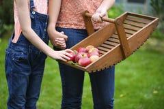 Montieren der Äpfel Stockfoto