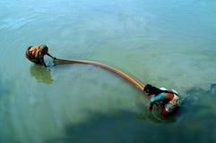 Montieren der Fische Stockfotos
