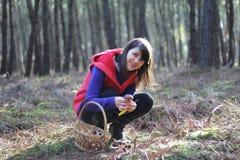 Montieren der Pilze Stockfoto