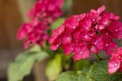 Montieren des Blütenstaubs Lizenzfreies Stockfoto