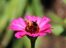 Montieren des Blütenstaubs Stockfoto