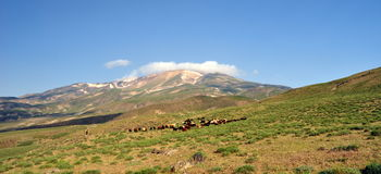 Der Ararat Lizenzfreie Stockfotografie