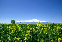 Montierung Ararat Lizenzfreies Stockfoto