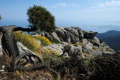 Montierung Capanne auf Elba-Insel Stockbilder